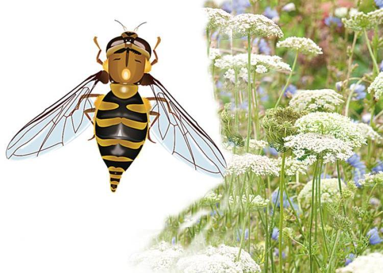 les insectes les auxiliaires des jardins. Black Bedroom Furniture Sets. Home Design Ideas